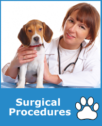 Pet Surgical Procedures